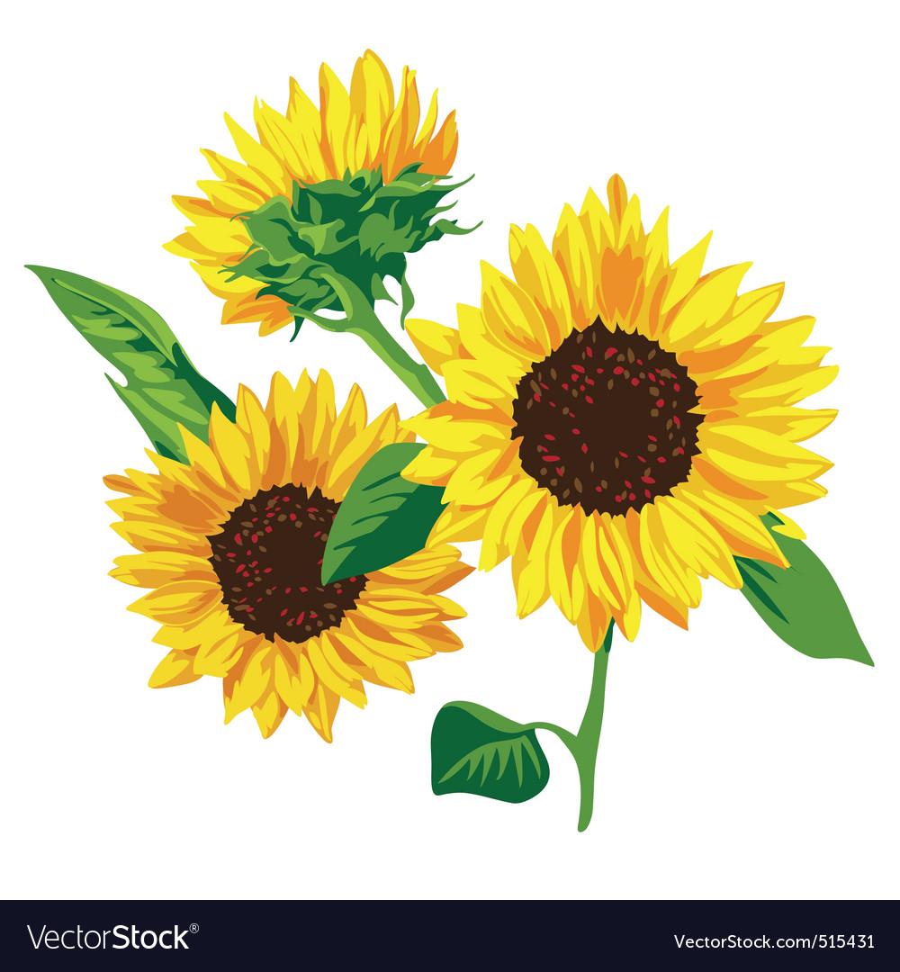 sunflower royalty free vector image vectorstock rh vectorstock com sunflower vector free sunflower vector art