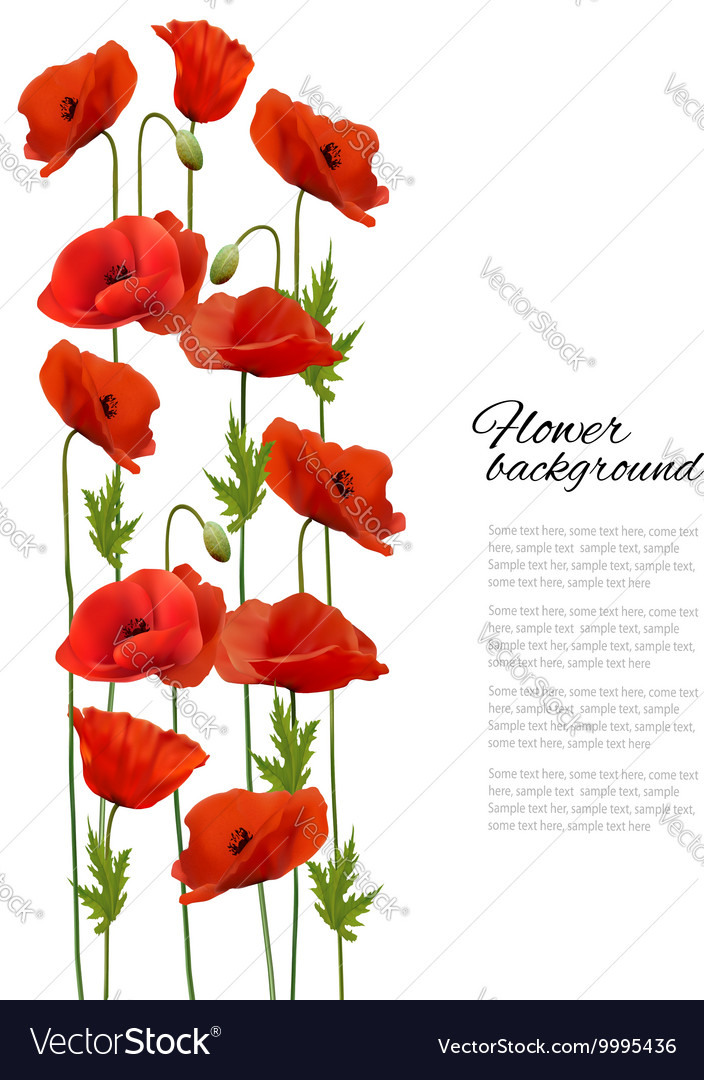 Flower background with poppies