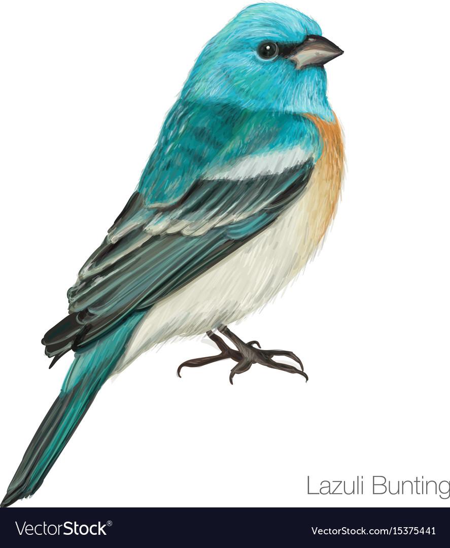 Exotic blue cardinal bird