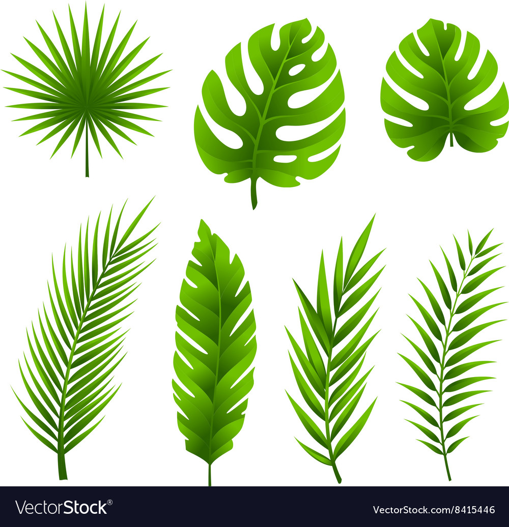 Tropical palm tree leaves collection