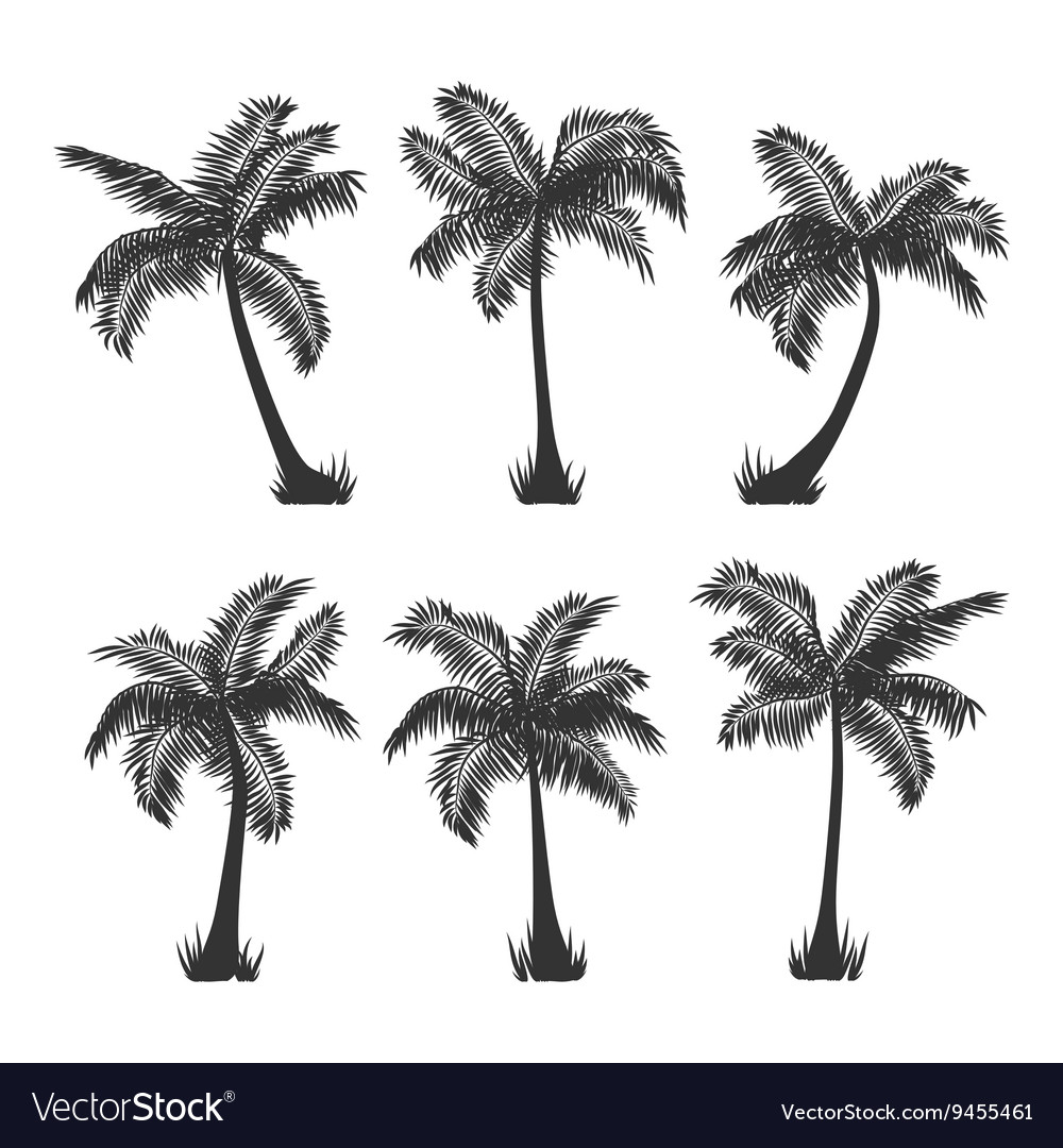 Coconut palm trees silhouette set on white