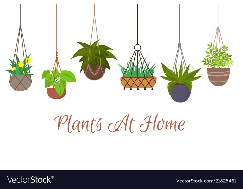 Indoor green plants in pots hanging on decorative