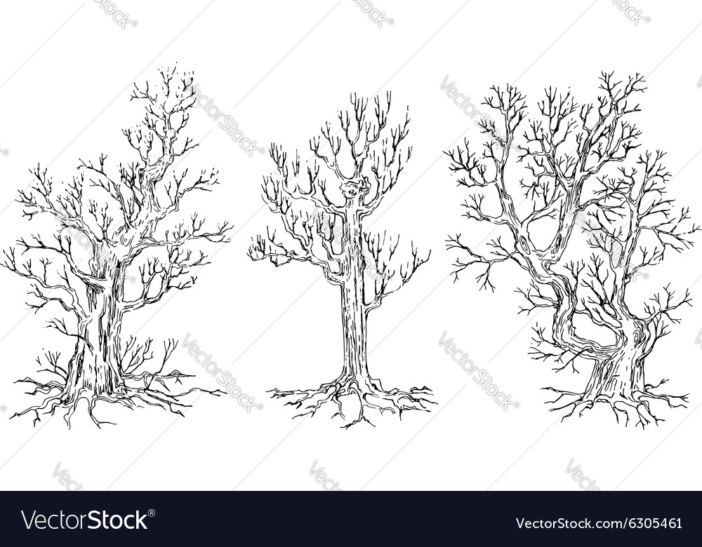 Set of hand drawn trees vector image