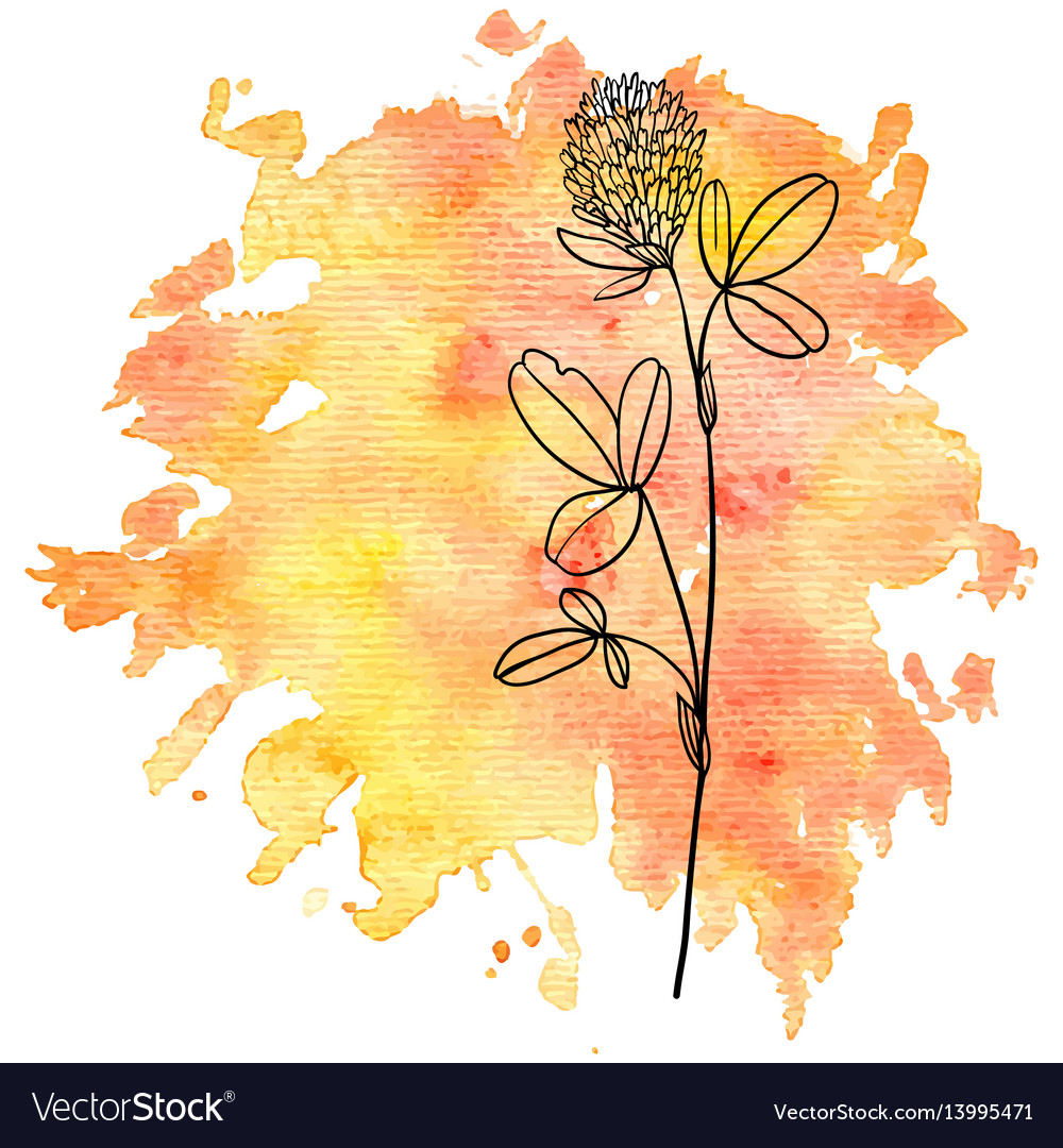 Flower Of Clover At Watercolor Background Vector Image