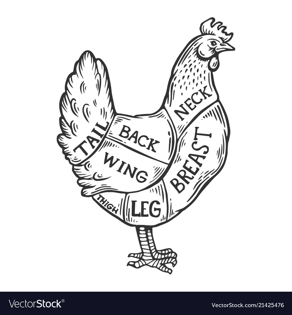 Meat Diagram Chicken Engraving Royalty Free Vector Image Leg Detailed Wing