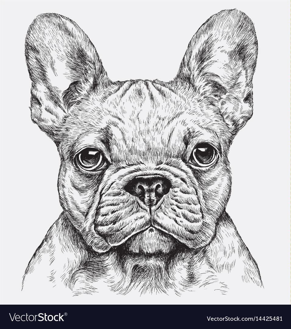 Highly detailed hand drawn french bulldog i