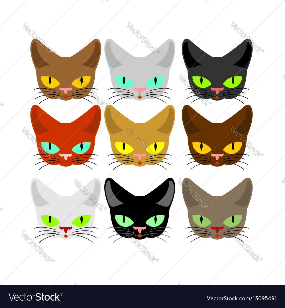 Cat face set head cats different color muzzle pet