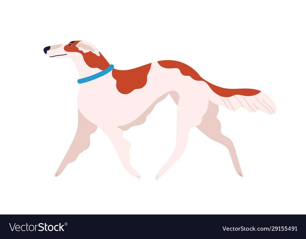 Russian canine greyhound dog breed flat vector