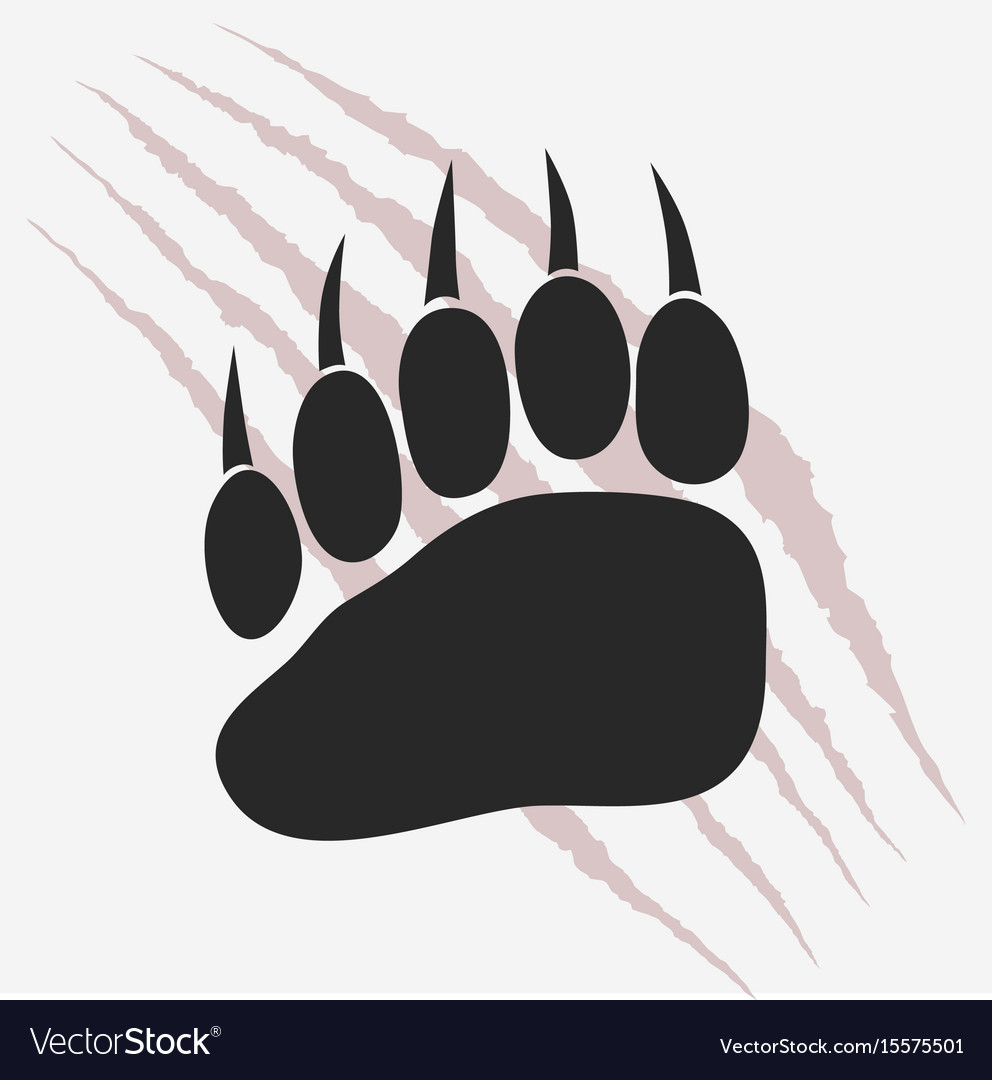 Bear footprint with claw scratches