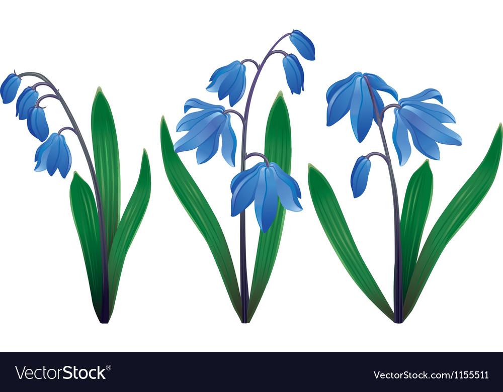 Blue snowdrops vector image