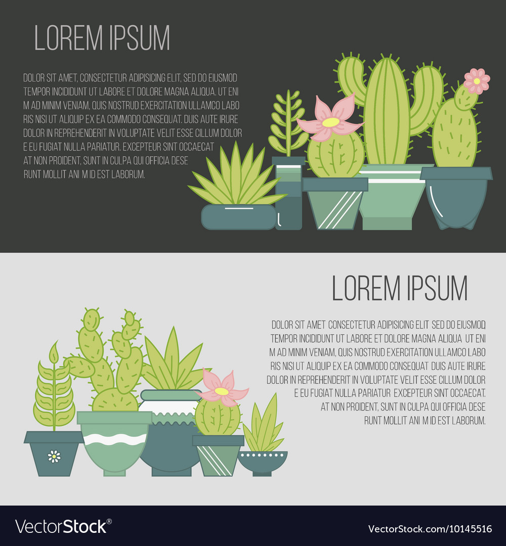 Flat banners with succulent plants and