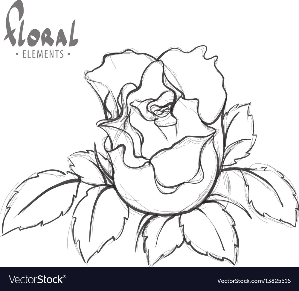 Rose painted schematically Royalty Free Vector Image on