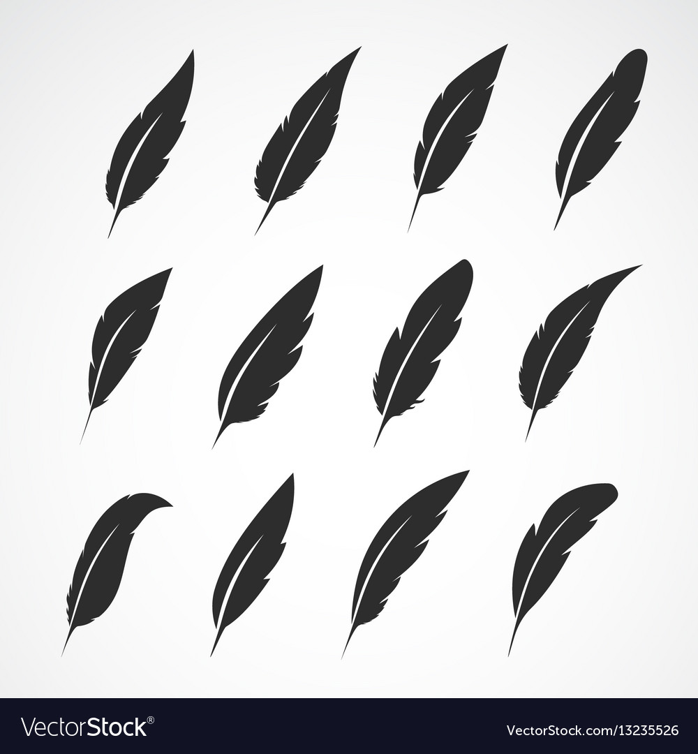Group of feather on white background