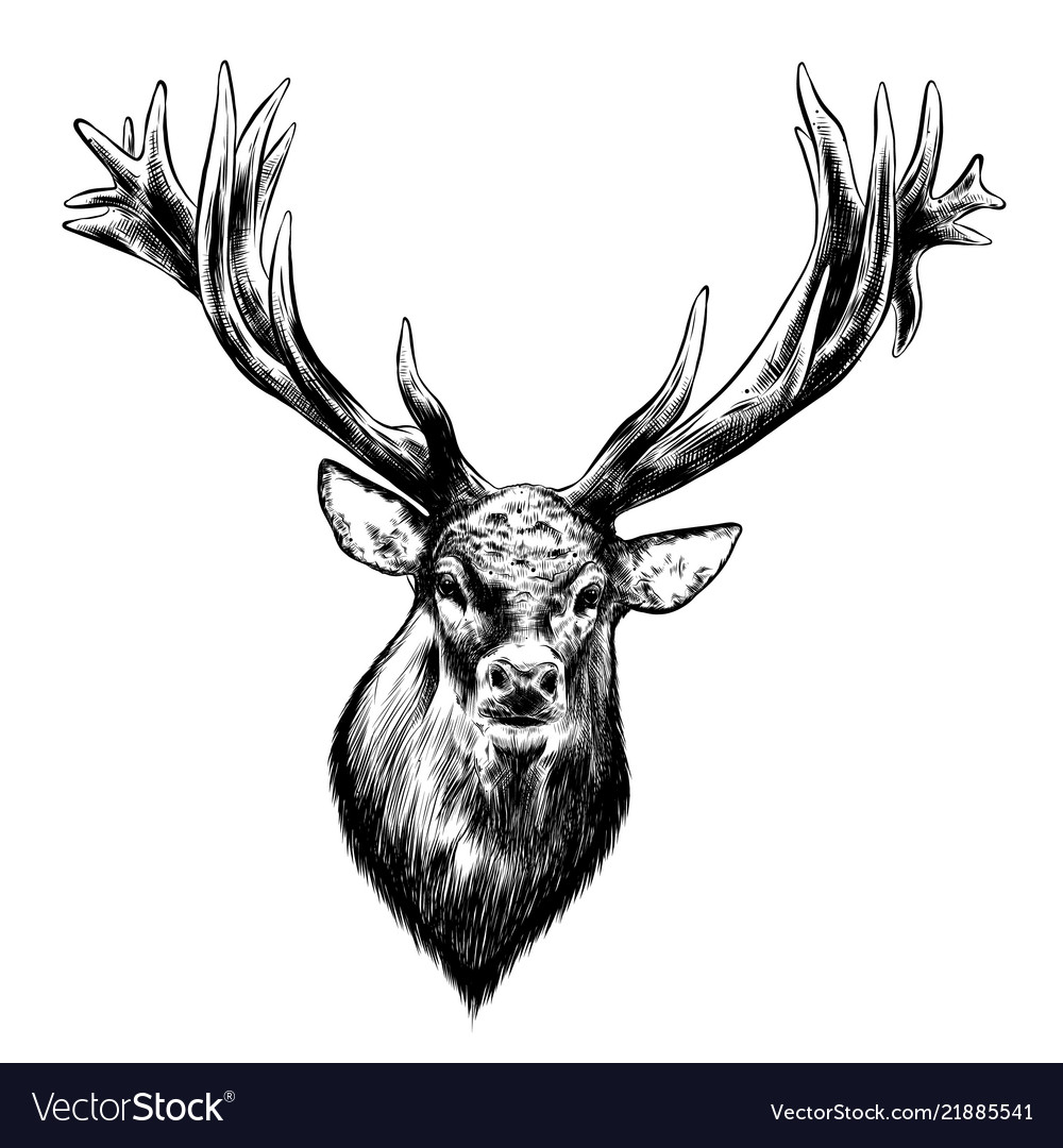 Hand drawn sketch deer in black isolated on