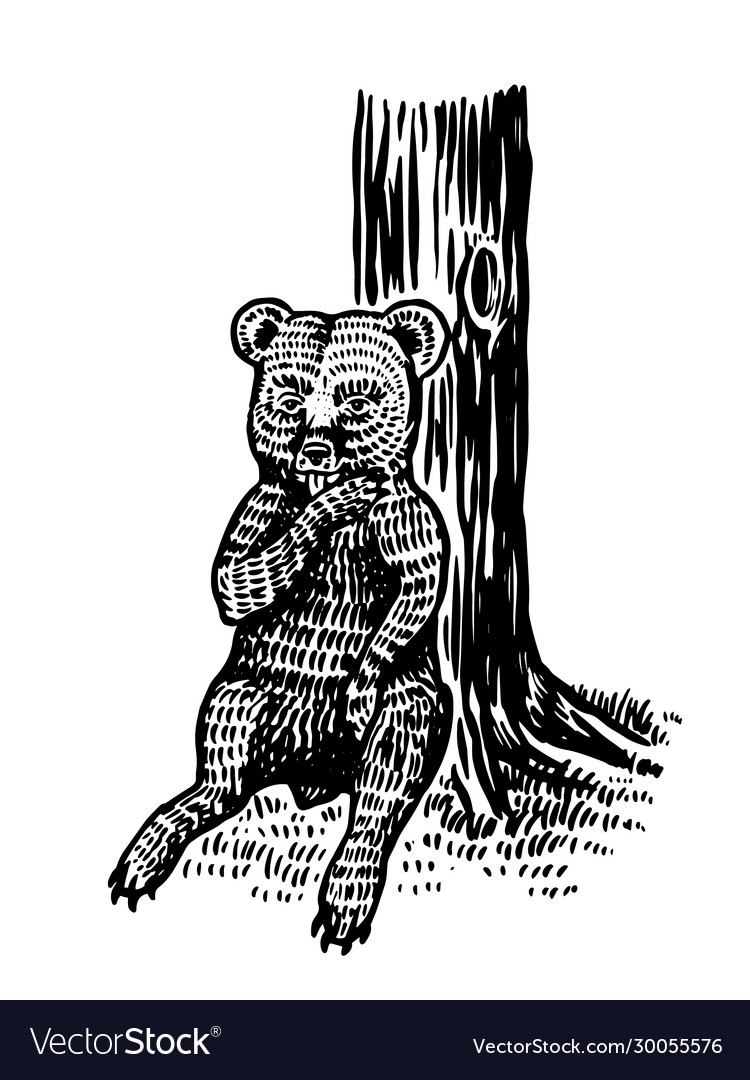 Baby little bear sits tree and licks its