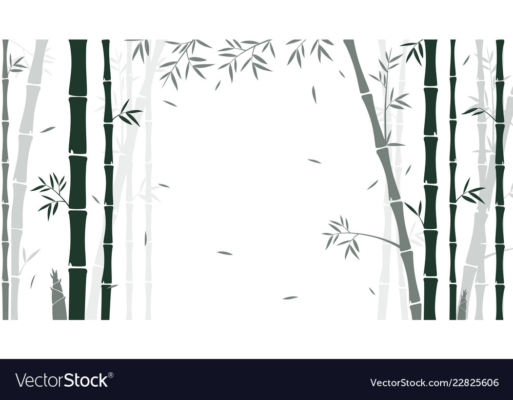Bamboo forest background for wallpaper