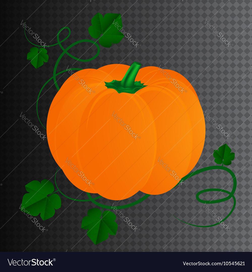 Halloween pumpkin with leaves vector image