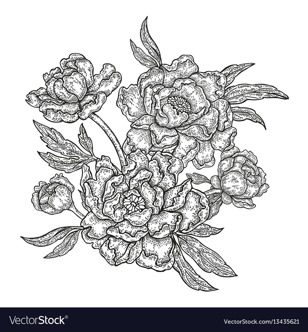 Hand drawn spring peony flowers and leaves