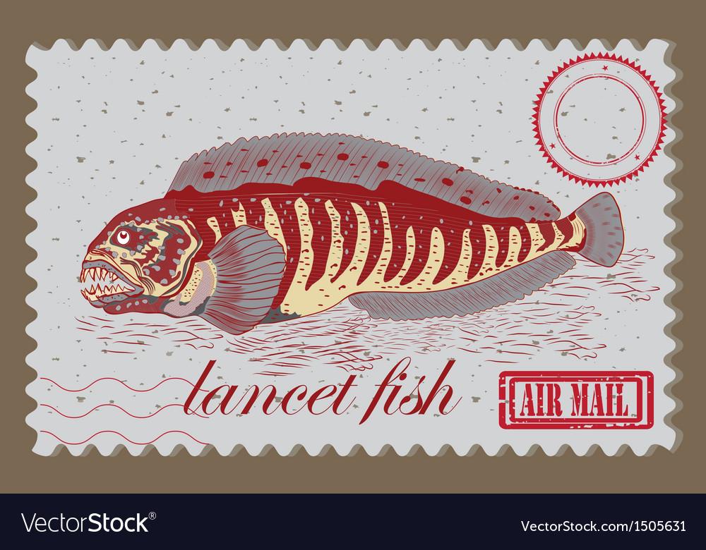 Lancet fish vector image
