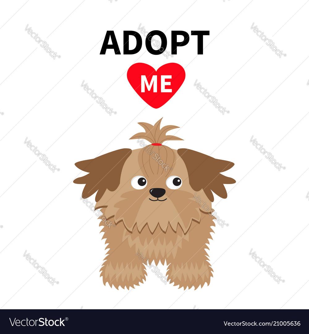 Adopt me dont buy shih tzu dog inside opened
