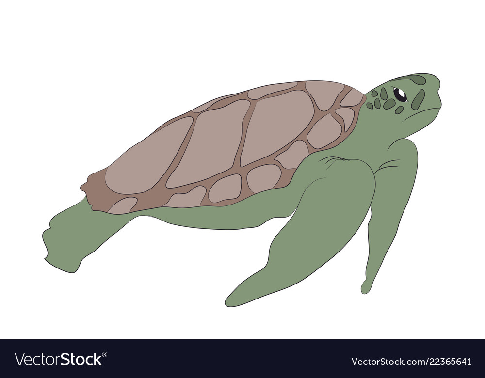 Green turtle swim drawing