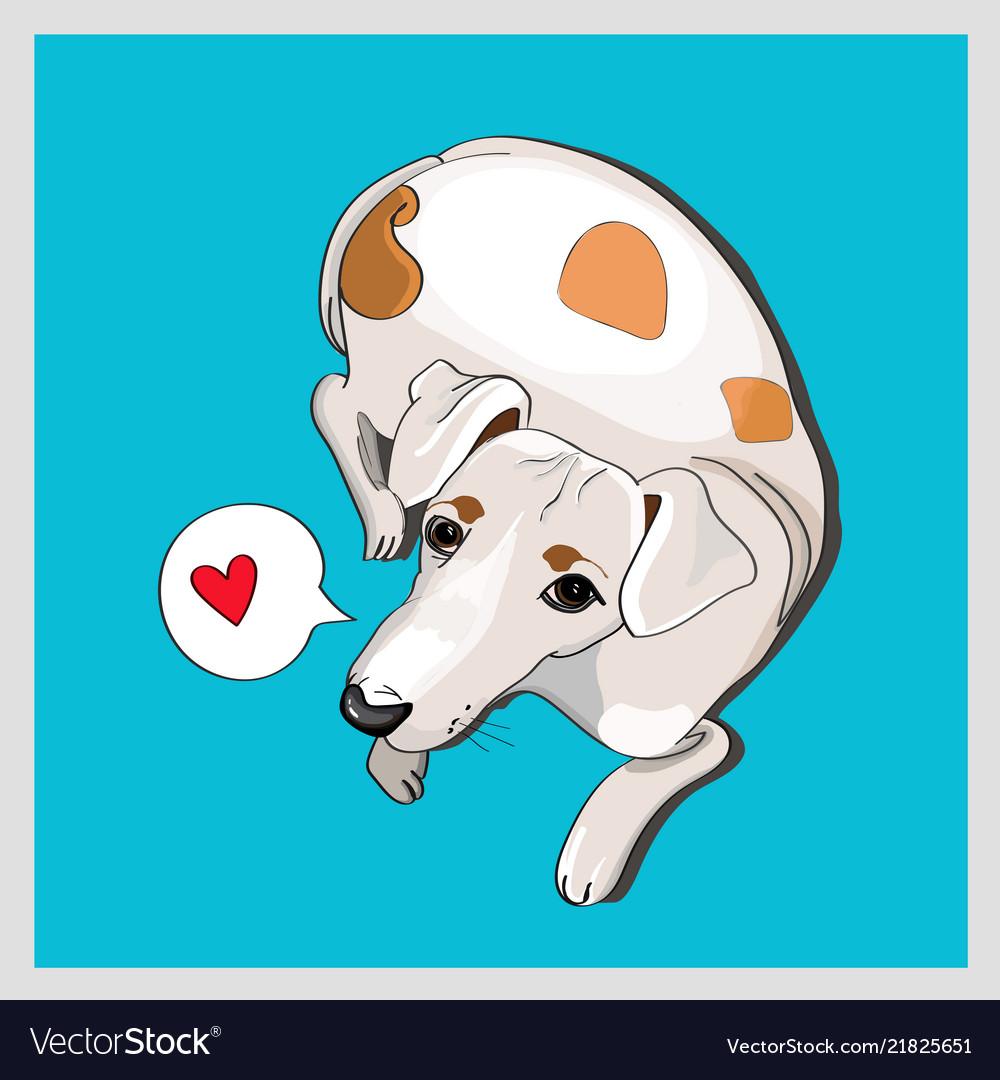 Cute white dog lying on blue background