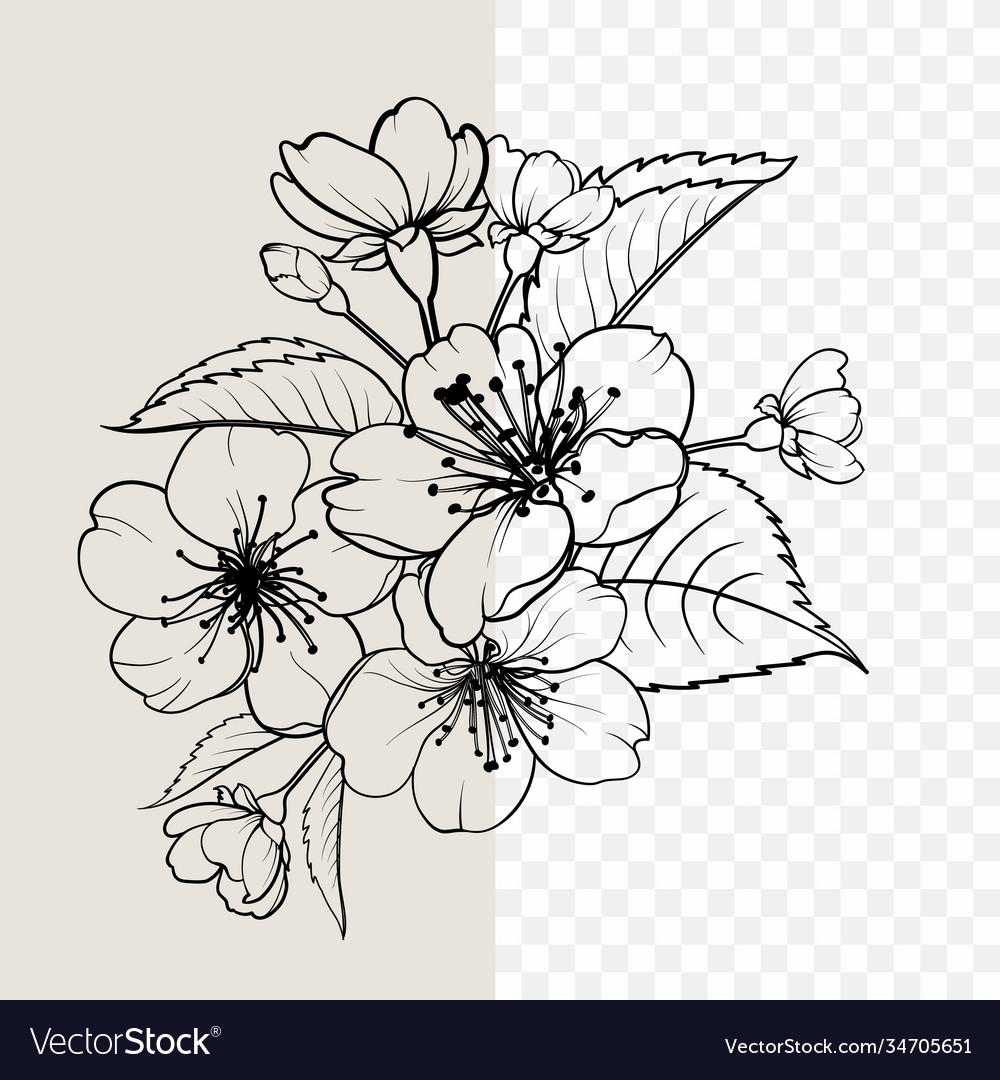 Hand drawn design elements sakura flowers