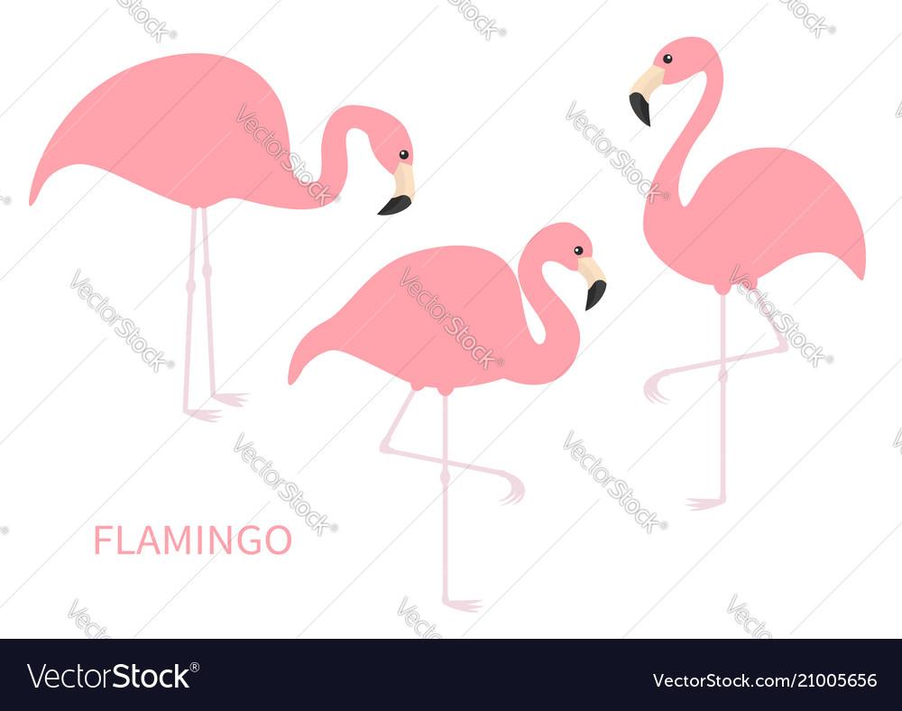Pink flamingo icon set three exotic tropical bird