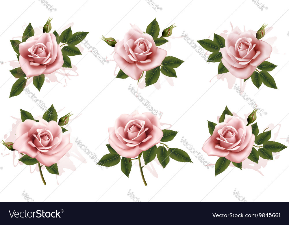 Beautiful set of pink ornate roses with leaves