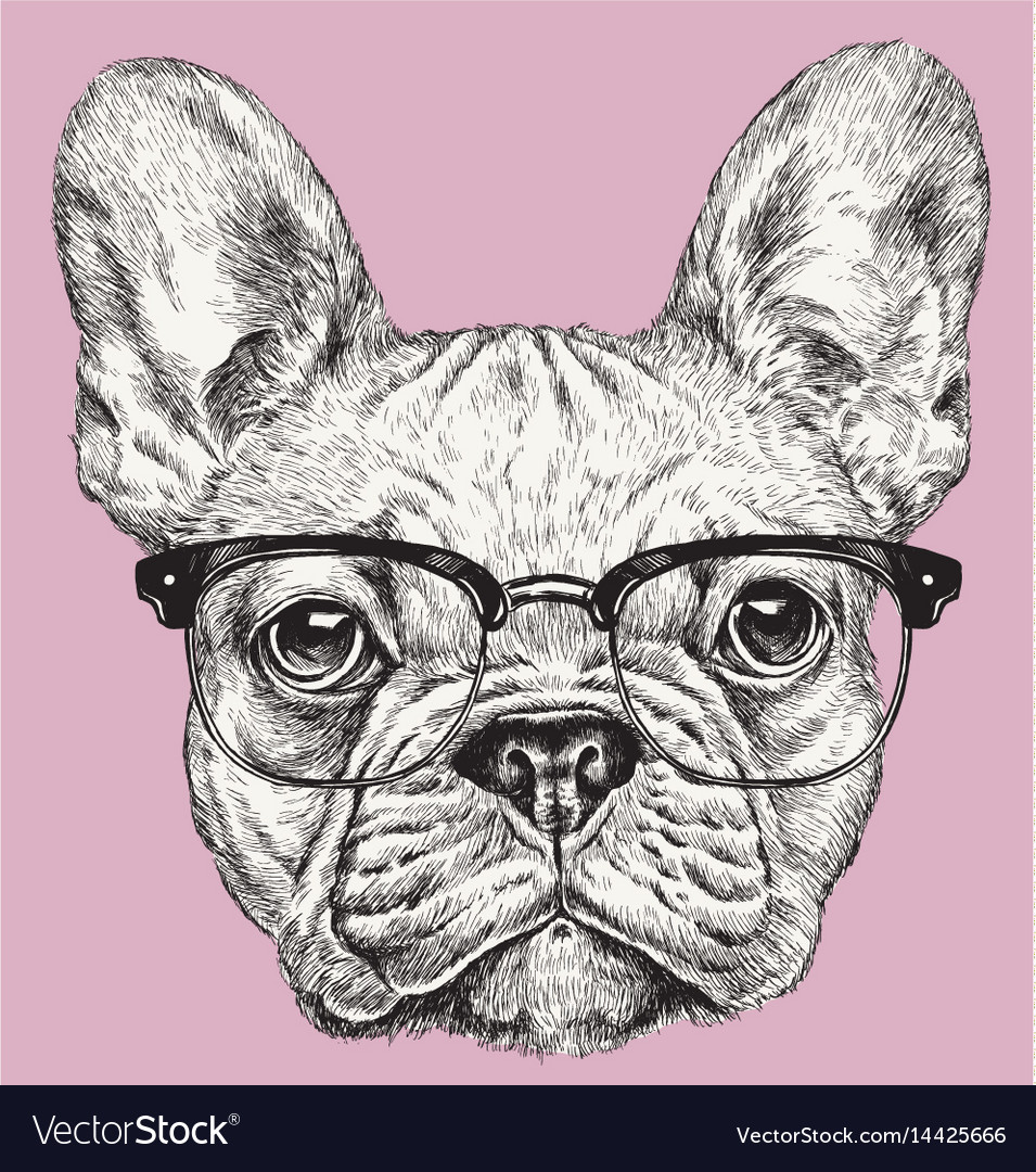 Hipster geek french bulldog