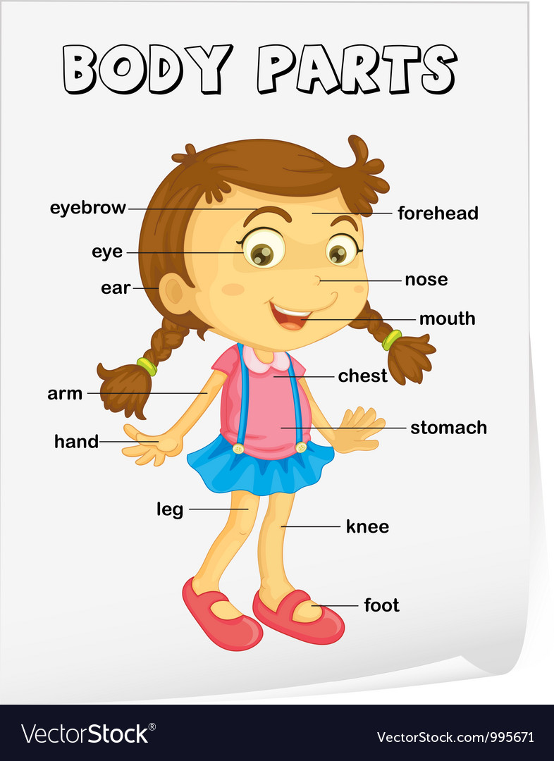 Body Parts Diagram Poster Vector Art - Download Girl Vectors