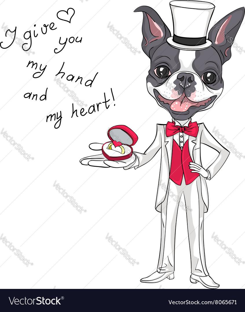 Fashion elegant groom dog Boston Terrier