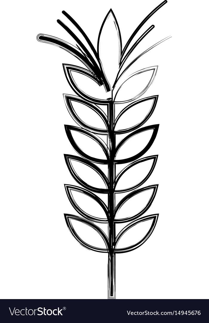 Figure healthy wheat organ plant nutricious