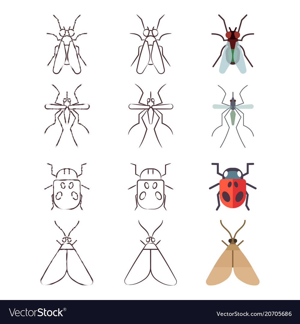 Flat line and skech icons of insects