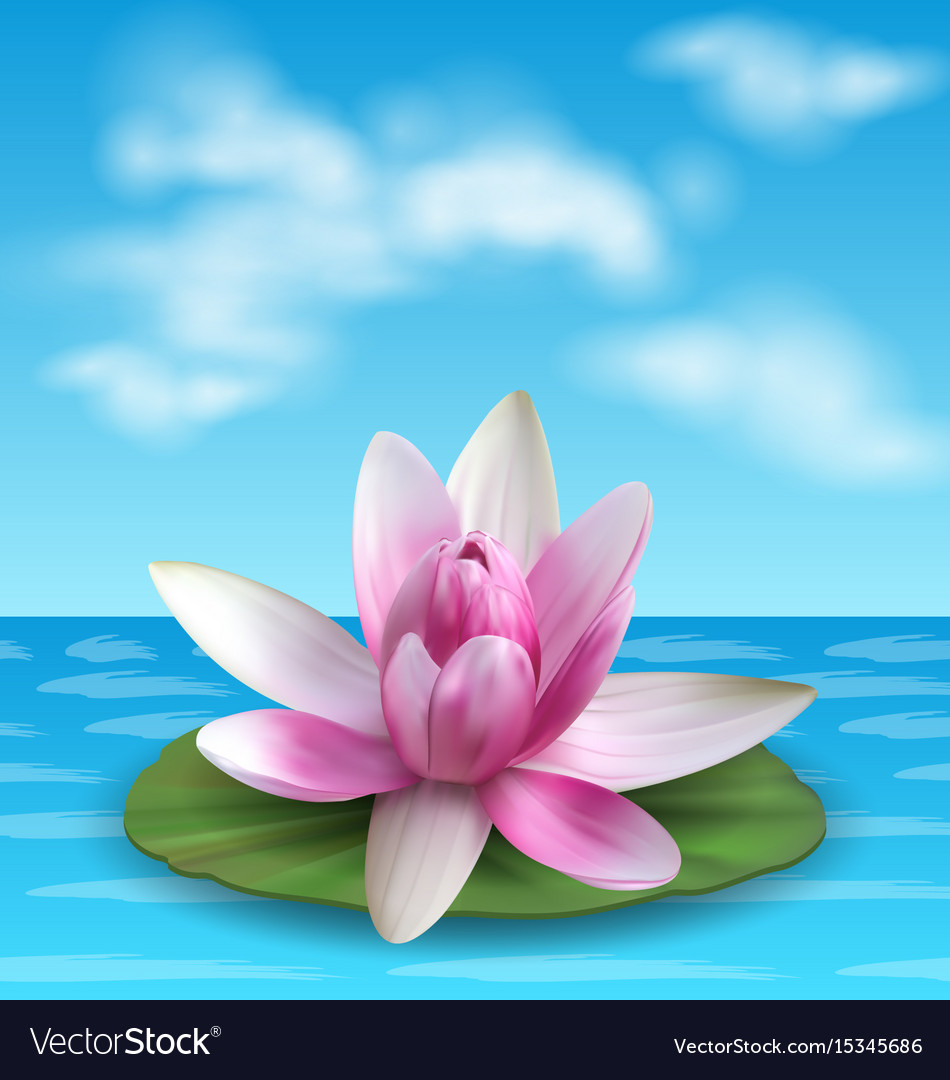 Water Lily Nenuphar Spatter Dock Pink Lotus On Vector Image