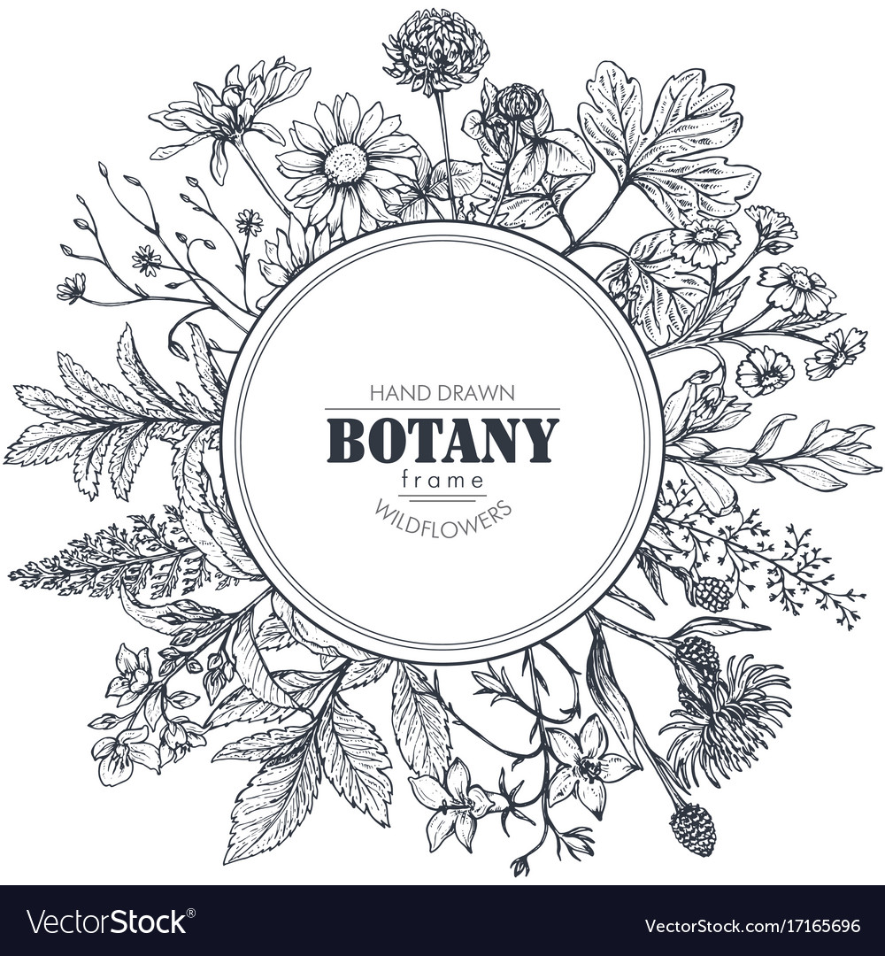 Circle Frame With Herb And Wildflower Vector Image