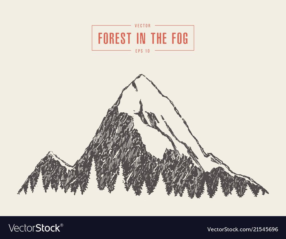 Mountain peak pine forest style drawn