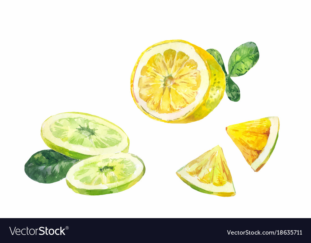 Cut slices of lemon bergamot or lime on a white