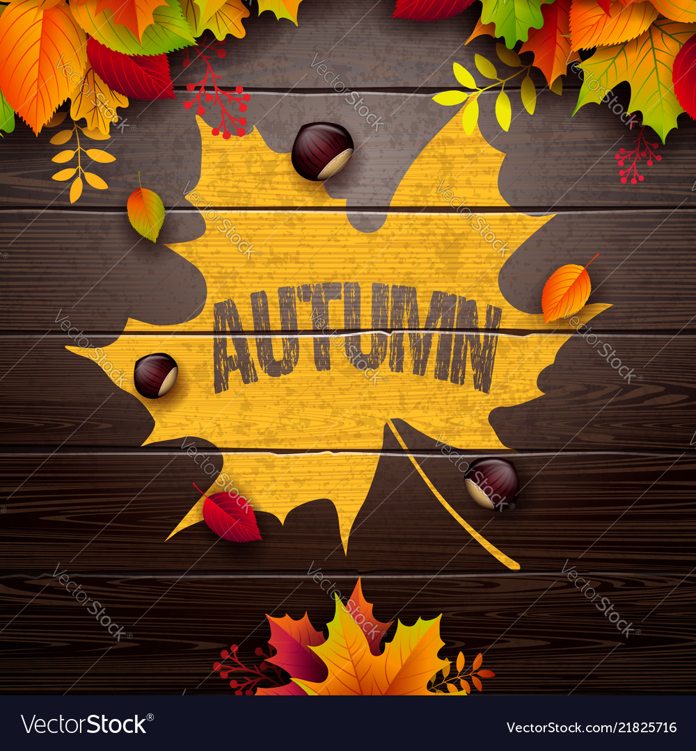 Autumn with colorful leaves and