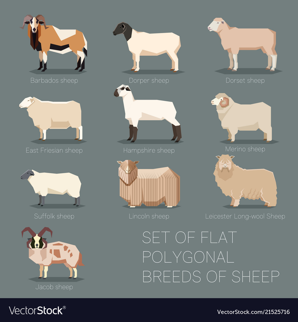 Set of flat polygonal breeds of sheep icons