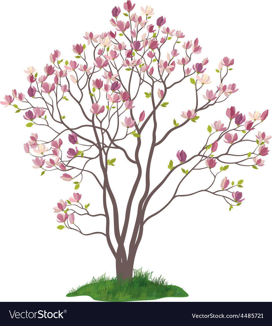 Magnolia Tree With Flowers And Grass Royalty Free Vector