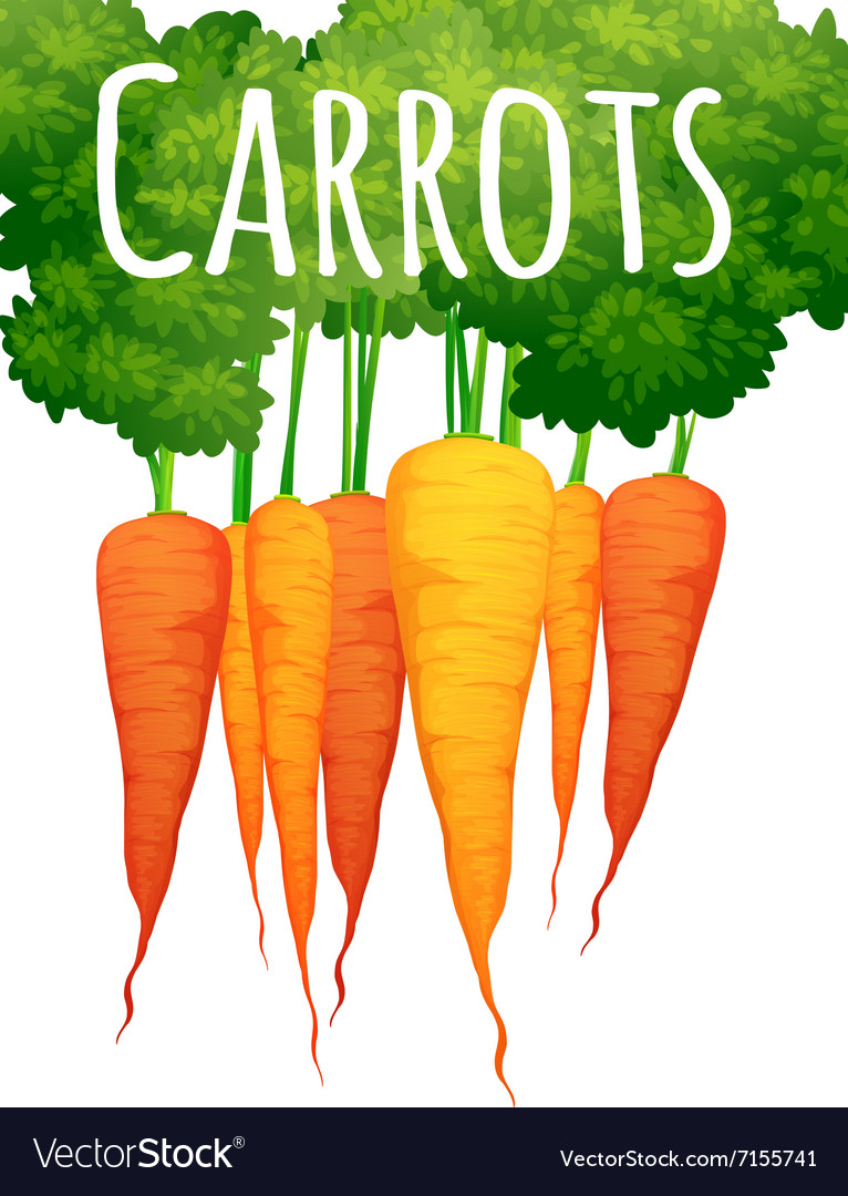 Fresh carrots with text design