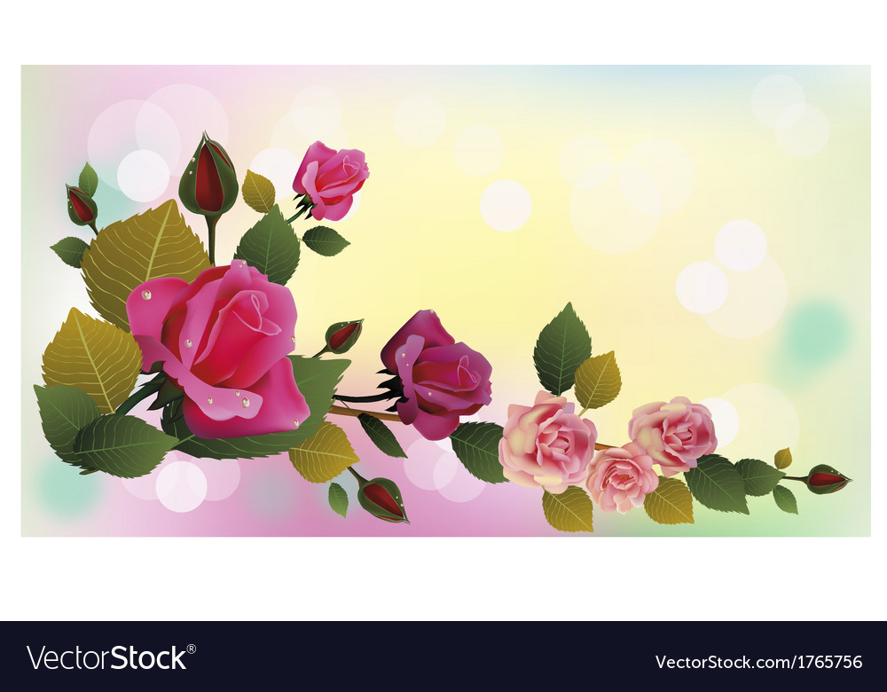Rose the most beautiful flowers in the world Vector Image