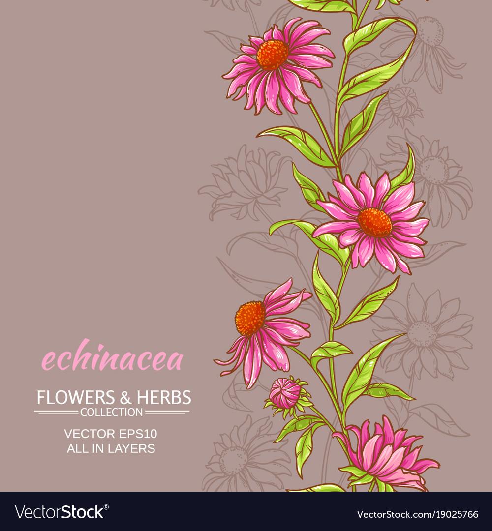 Echinace purpurea background