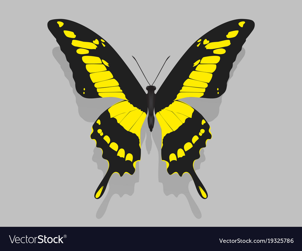 Black And Yellow Butterfly Images Best Image Of