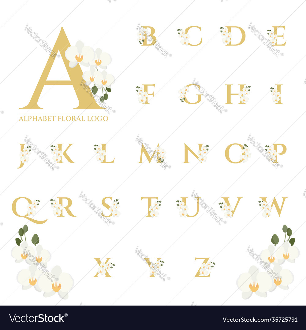 Beautiful gold serif phalaenopsis orchid floral