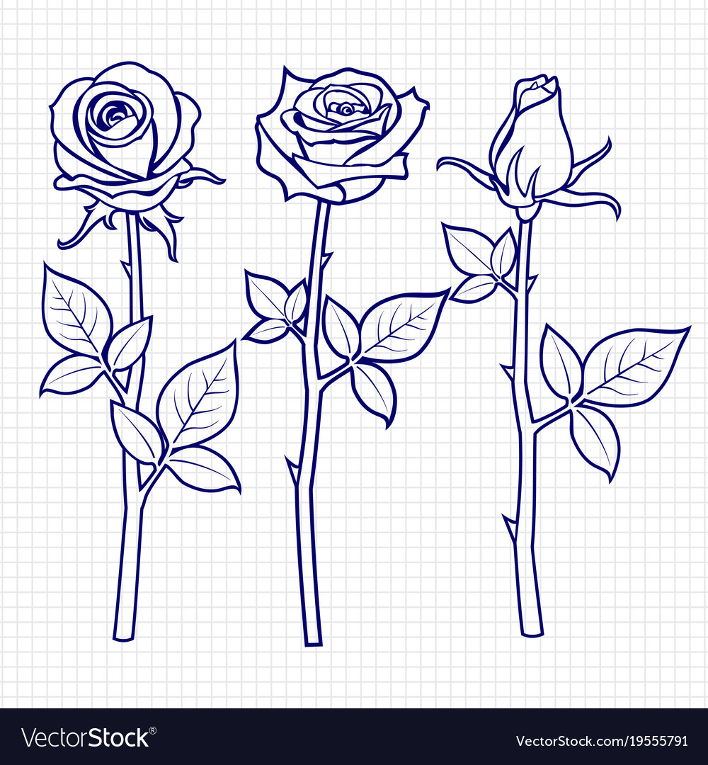 Hand drawn sketch roses flowers vector image