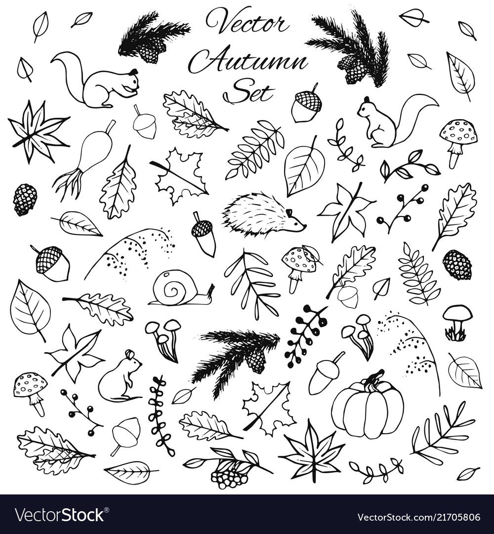 Hand drawn set of autumn leaves animals acorns