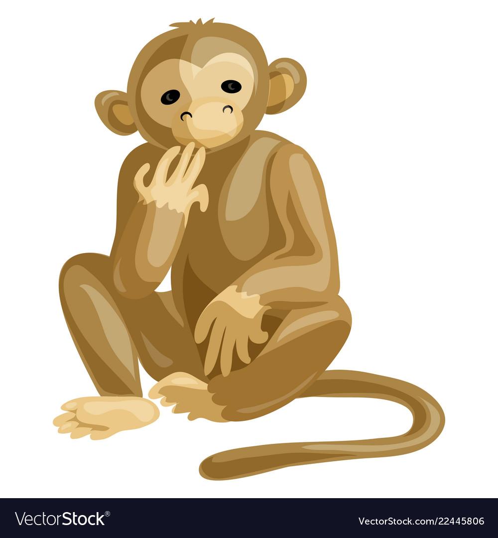 Monkey icon cartoon style