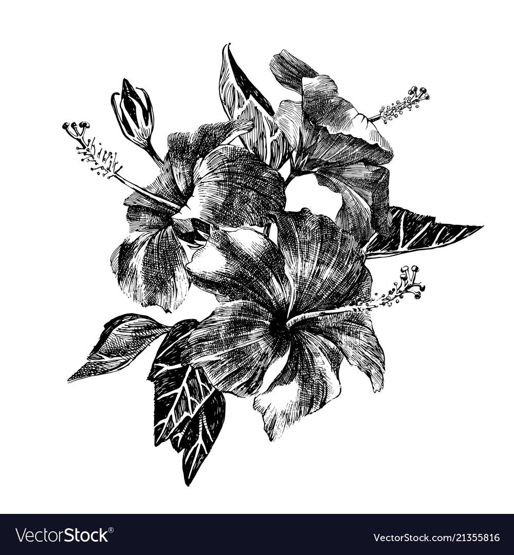 Hand drawn hibiscus brunch